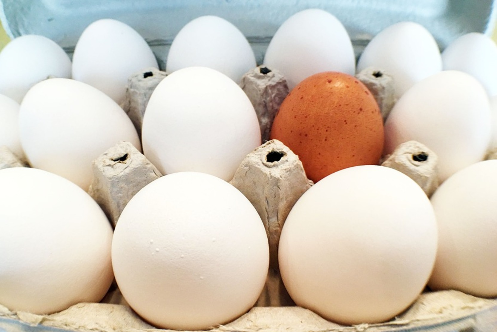 Россельхознадзор разрешил ввозить в Россию яйца и цыплят из Великобритании