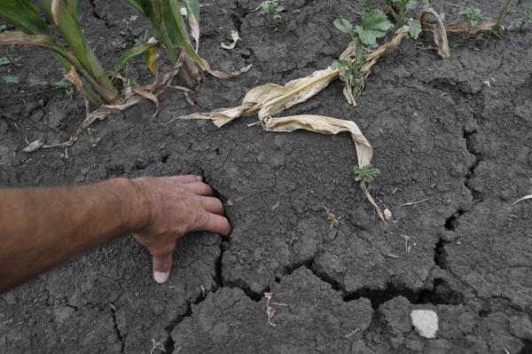 В районе Курганской области ввели режим ЧС из-за засухи