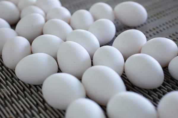Экономист рассказал, как спасти россиян от подорожания яиц и курятины