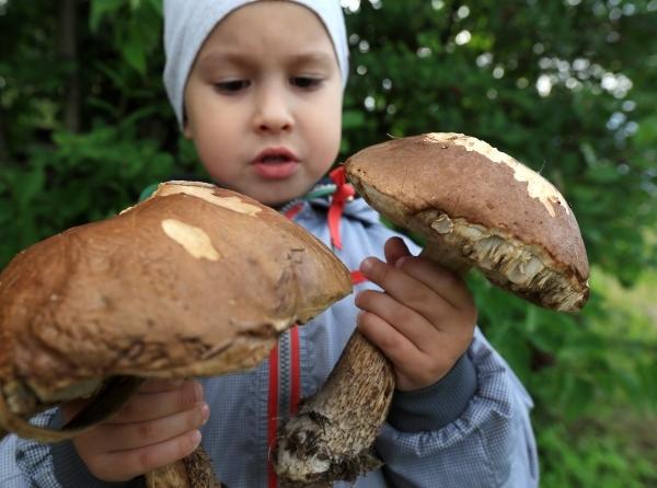 В России ужесточили правила сбора ягод и грибов