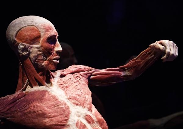 Созерцание трупов. В РПЦ назвали неуместной выставку Body Worlds
